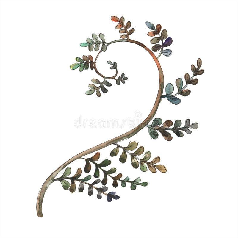 Fern Leaves Fogliame floreale del giardino botanico della pianta del freno della foglia Elemento isolato dell'illustrazione illustrazione vettoriale