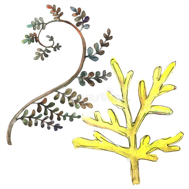 Fern Leaves Follaje floral del jardín botánico de la planta del freno de la hoja Elemento aislado del ejemplo libre illustration