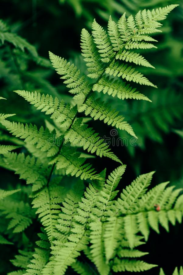 Fern leaves in forest stock image
