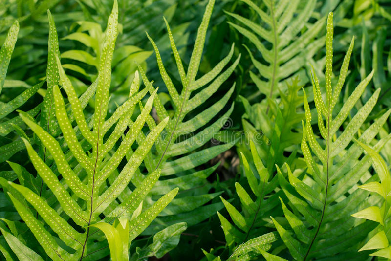 Fern leaves in the garden stock images