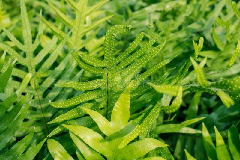 Fern leaves in the garden stock photo