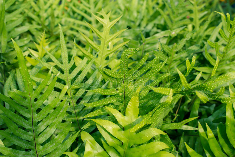 Fern leaves in the garden royalty free stock photos