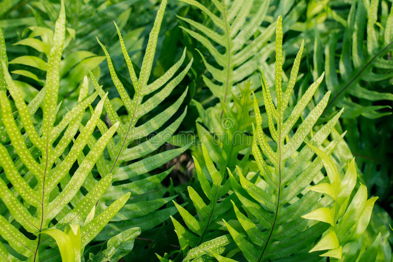 Fern leaves in the garden royalty free stock image
