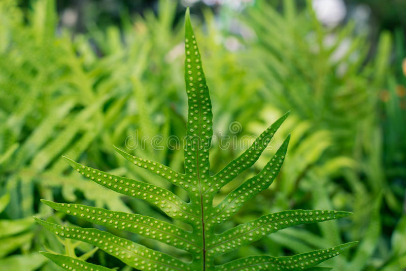 Fern leaves in the garden stock photography