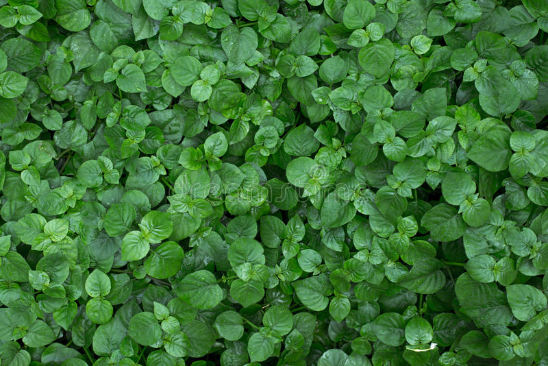 Fern leaves in the garden stock image