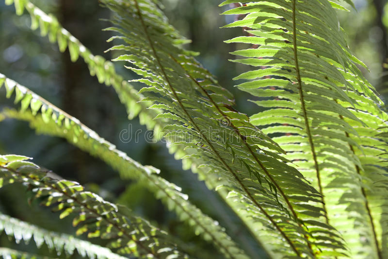 Download Fern leaves New Zealand stock image. Image of scenic - 28714621