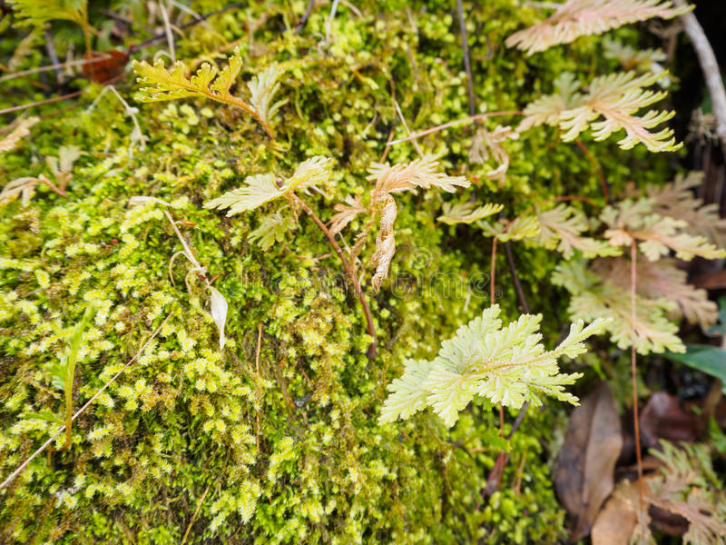Fern leaves. On the small island of rocks stock images