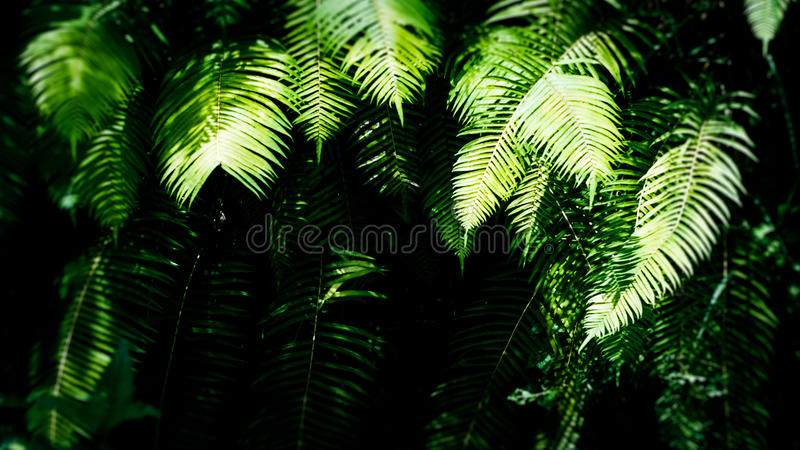 Fern Leaves sombreado na floresta úmida, Ubud, Bali, Indonésia foto de stock royalty free