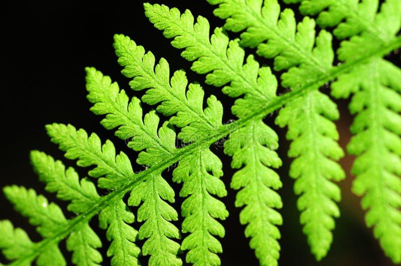 fern liści, zdjęcie stock