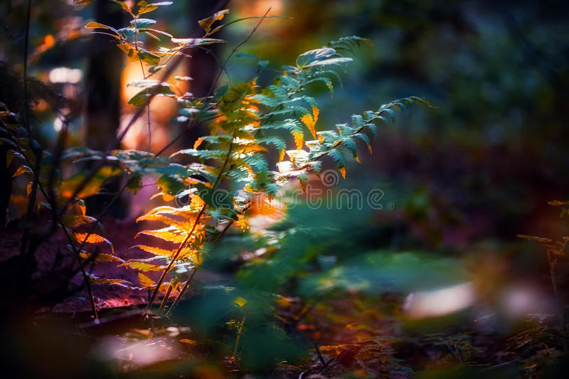 Fern in light stock images
