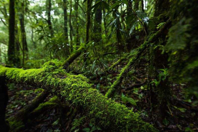 Fern, moss on tree plant in tropical rain forest royalty free stock image