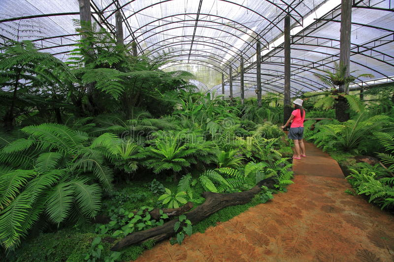 Fern nursery. Is opening for learning about nature royalty free stock photo