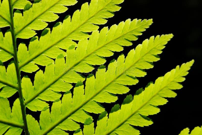 Download Fern pattern stock photo. Image of pattern, branch, green - 3111130