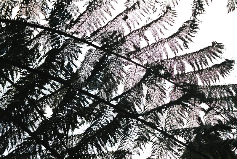 fern patterns stock photography