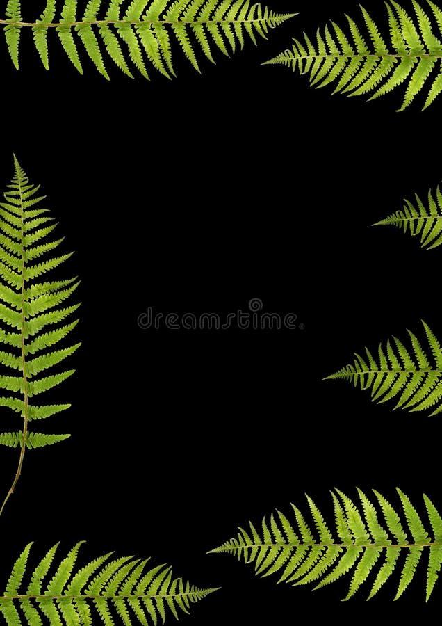 fern piękności royalty ilustracja