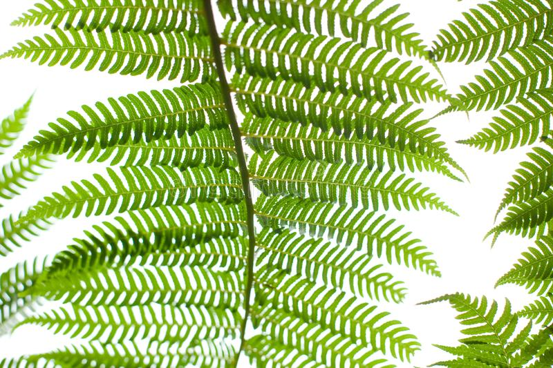 Download Fern Plant stock photo. Image of growth, tropical, plant - 14312060