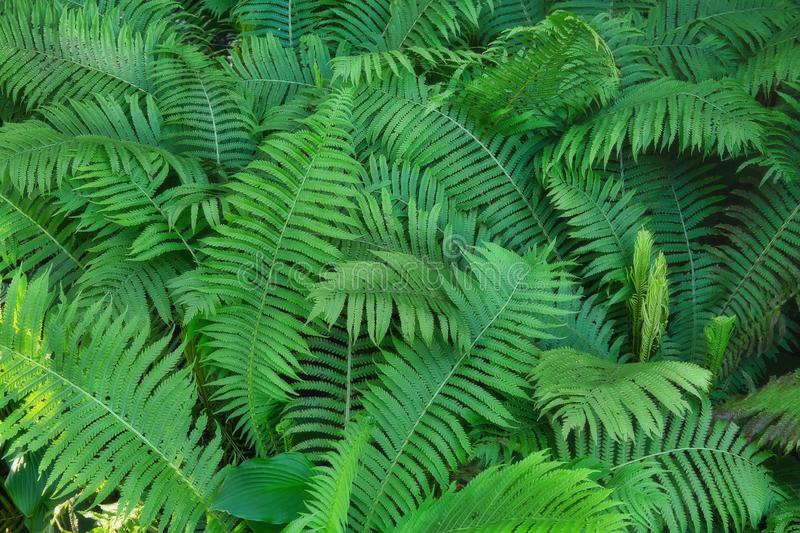 Fern plants in the shadow of trees. Natural outdoor background stock photos