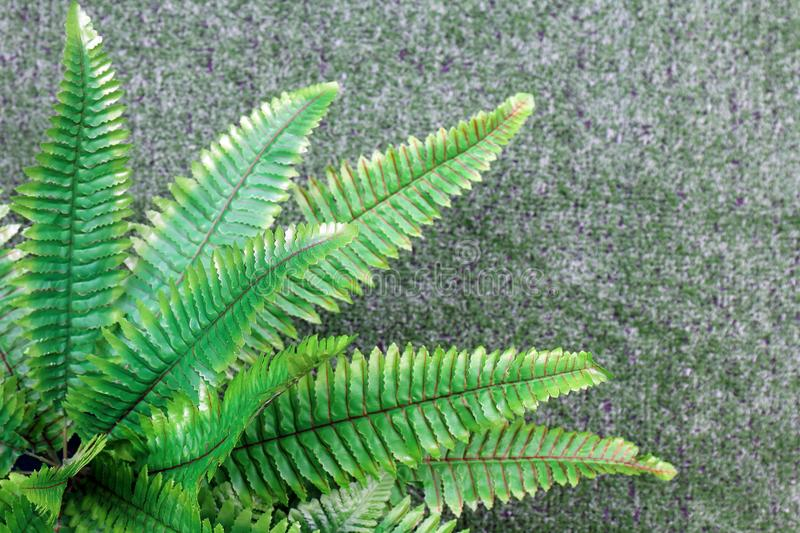 Fern plastic green decoration on blur background artificial grass royalty free stock image