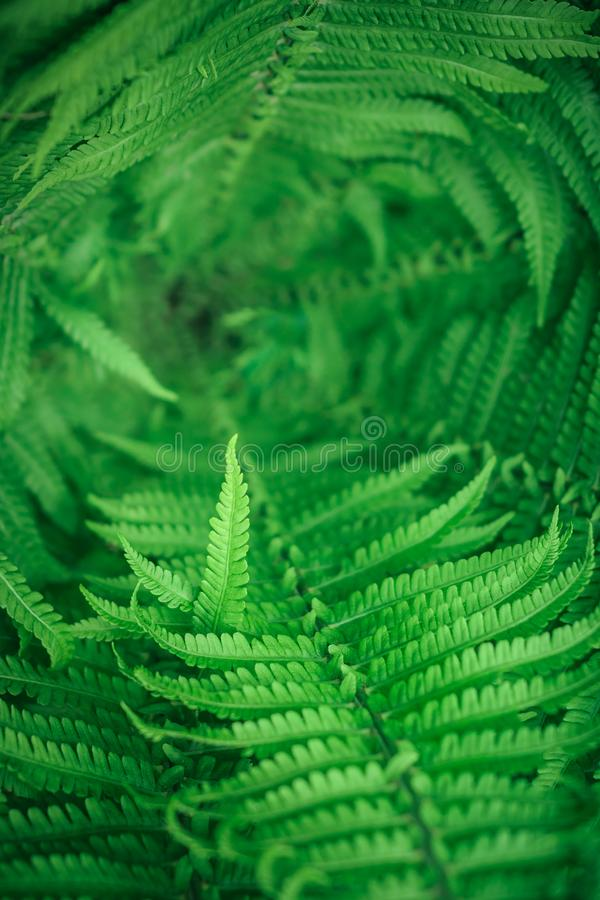 fern polypodiales close-up top view with limited focus area stock image