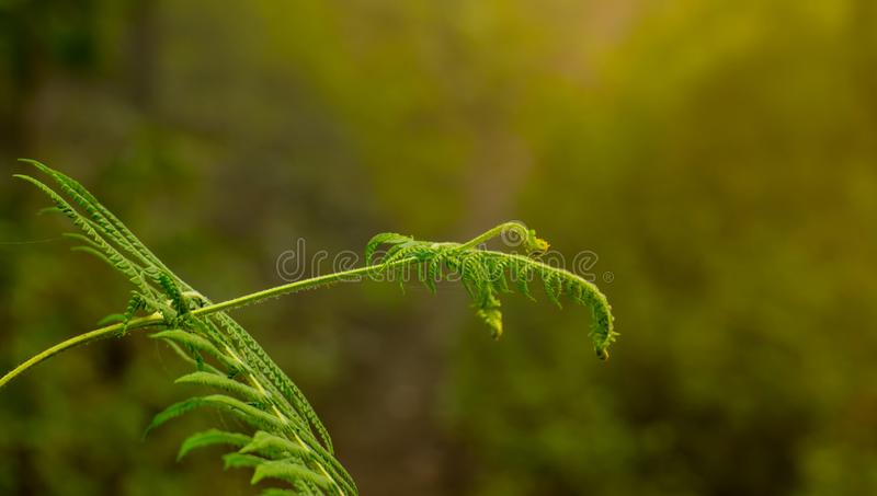 Fern and sunshire stock photo