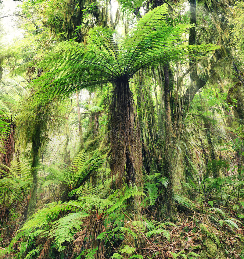 Download Fern tree stock image. Image of fairytale, forest, liane - 23665885