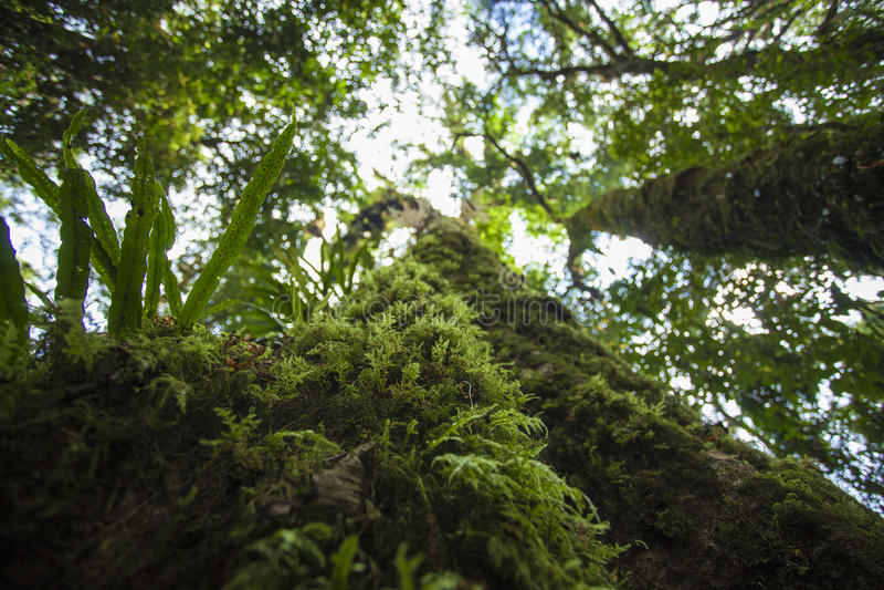 03 fern tree 库存图片