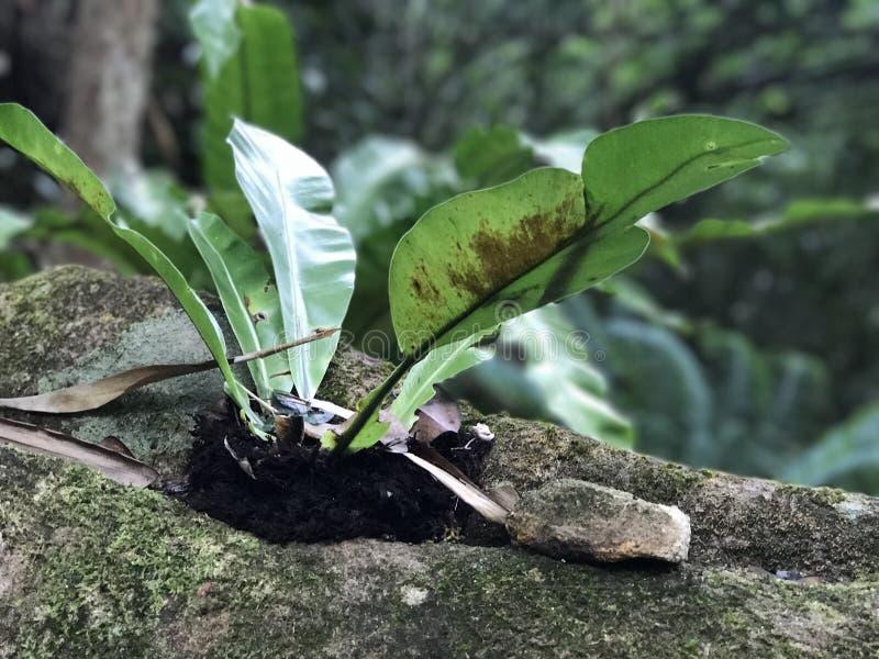 03 fern tree 图库摄影