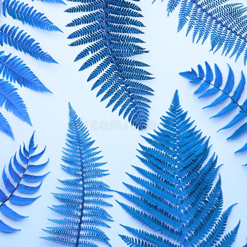 Fern Tropical Leaf. Surreal Nature Blue Background. Fern Tropical Leaf. Neon Floral Leaves Fashion Concept. Vivid Surreal Blue Design. Art Gallery. Creative stock photo