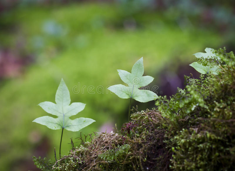 Download Fern In Tropical Mountain  Forest Stock Photo - Image: 25076992