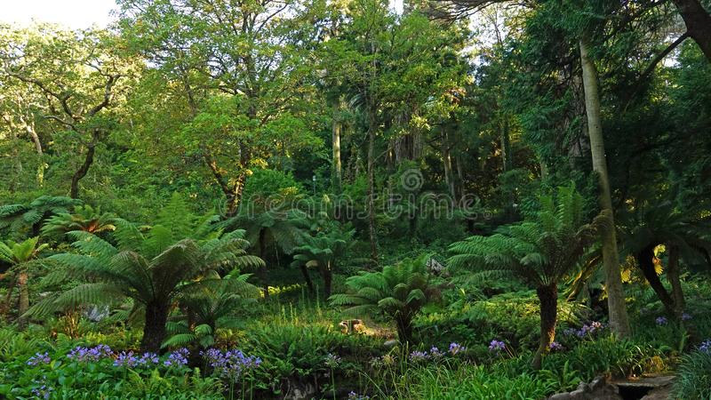 Fern Garden in Romantic Pena National Palace on hill in Sintra, Portugal. Fern valley of the Queen at The Palacio da Pena. The palace is one of the world`s most stock photos