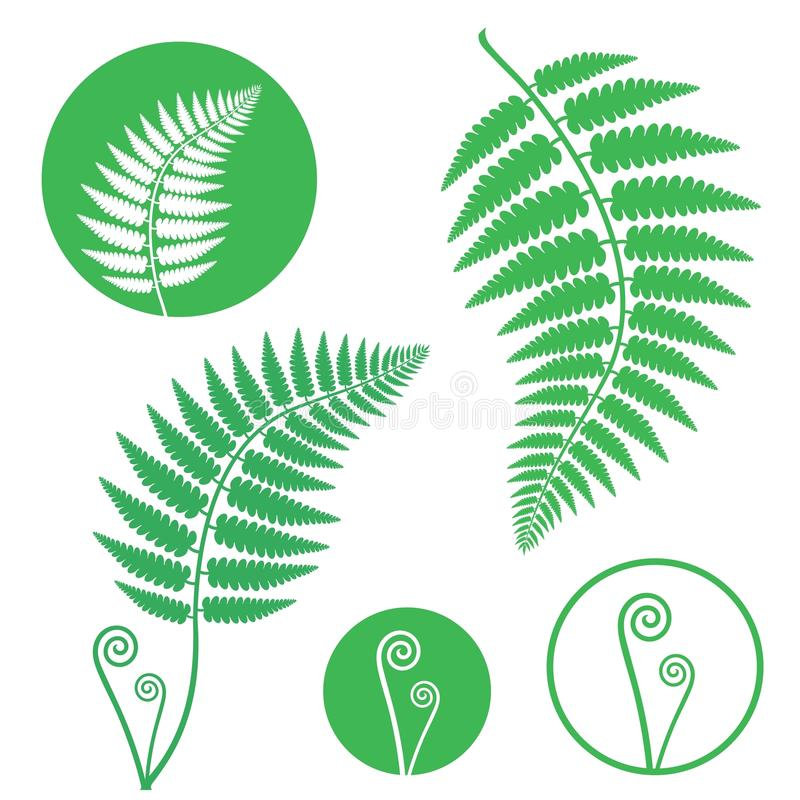 Fern. Vector illustration (EPS 10 stock illustration