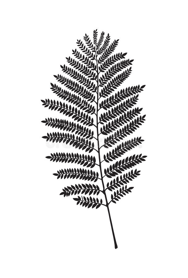 Fern vector leaf. Fern leav silhouette. Vector illustration. Decor element royalty free illustration