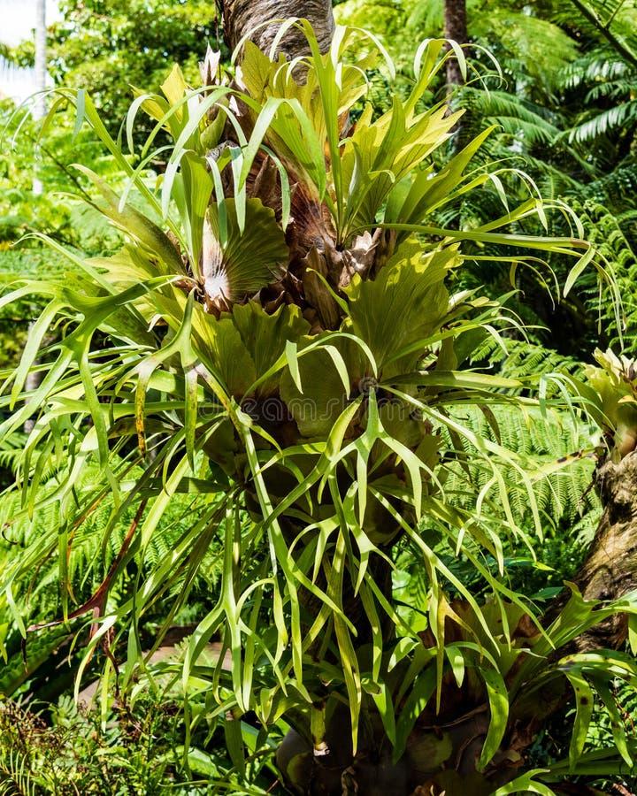 Fern w drzewie fotografia stock