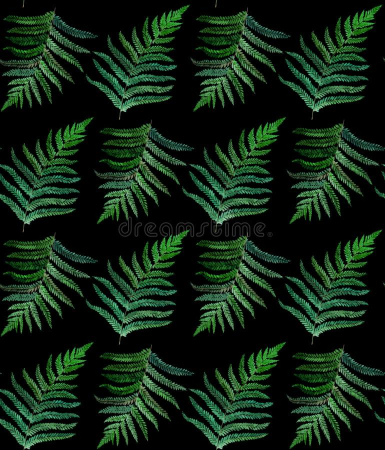 Fern watercolor seamless pattern on black royalty free illustration