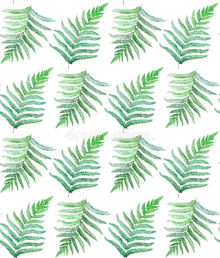 Fern watercolor seamless pattern royalty free illustration