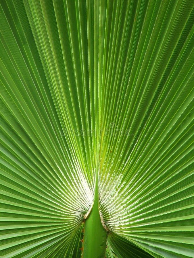 fern wentylatora zdjęcie stock
