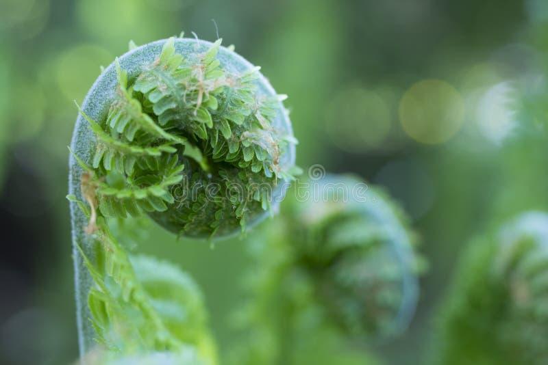 Image result for free images unfurling verdant fern