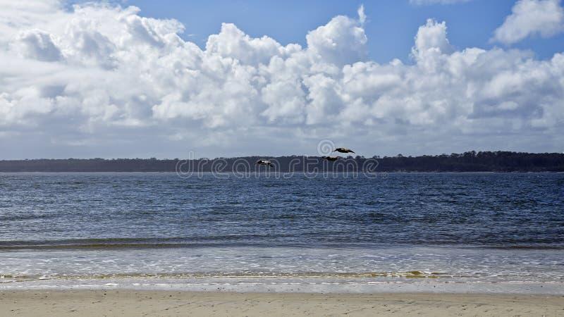 Fernandina Beach is occupied by wild birds, Florida, USA. The Amelia Island Florida, Fernandina Beach is occupied by wild birds, Florida, USA stock photos