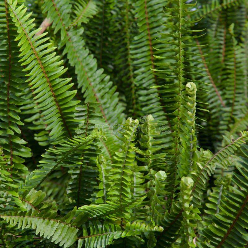Free Ferns Stock Image - 16248031