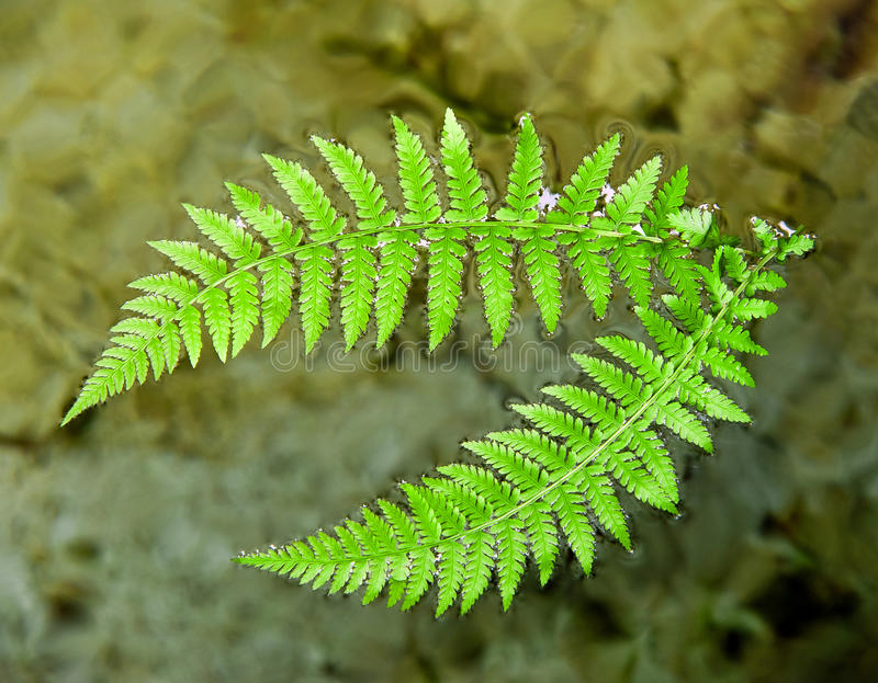 Ferns. Branches in the water stock photos