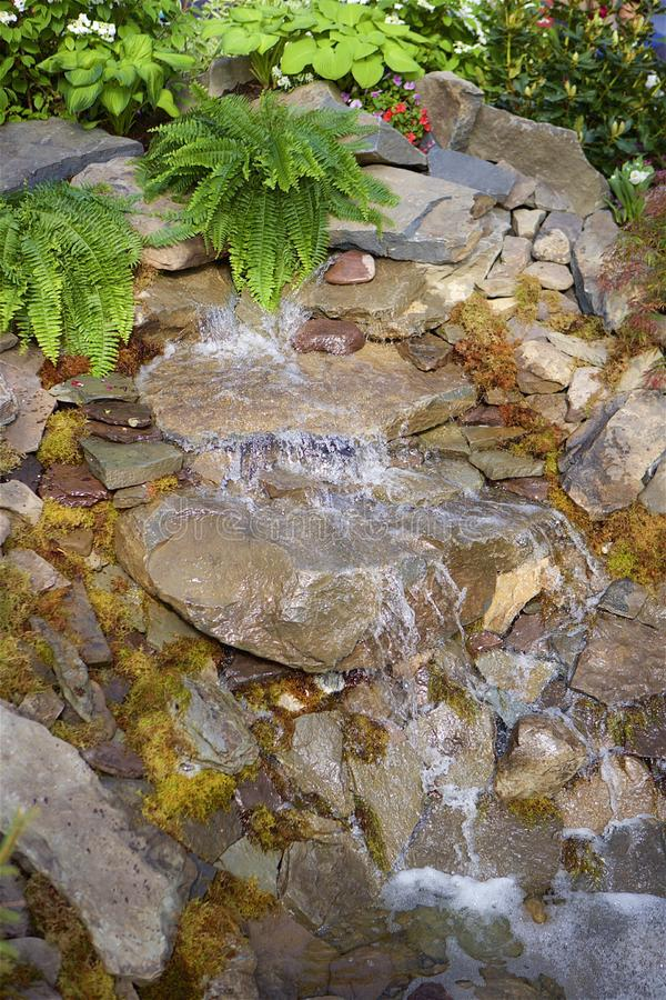 Ferns and Falls. Garden waterfall trickling over mossed rocks.  Ferns, flowers and greenery in the background stock images