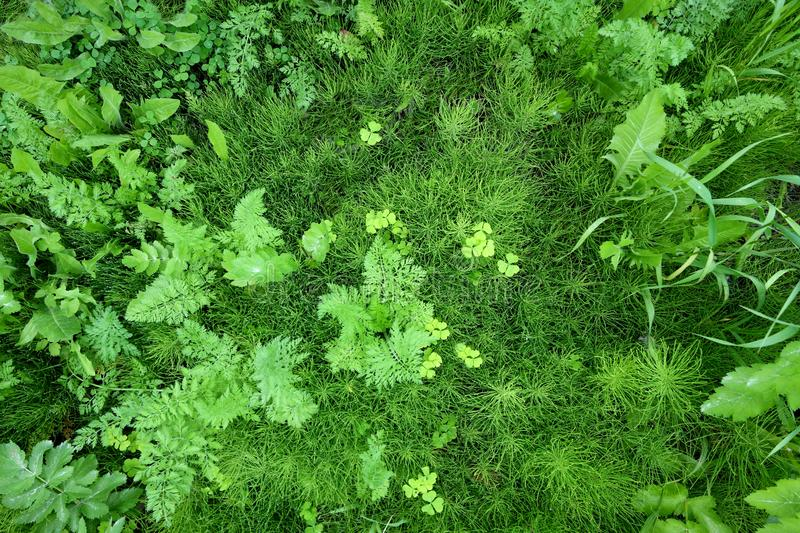 Ferns and Greenery Top View stock images