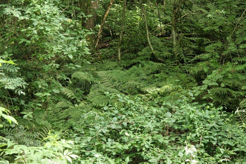Ferns stock photos