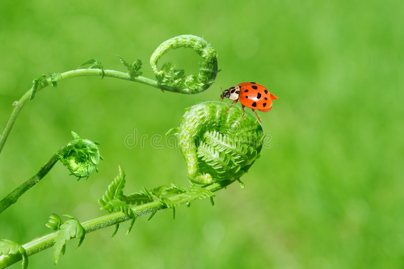 Ferns and lady bug stock photo