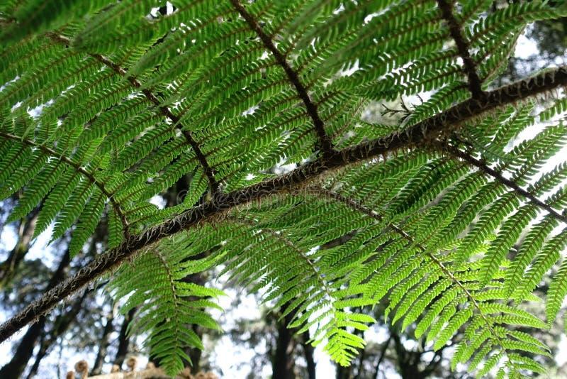 Ferns, le piante sono presenti in aree tropicali delle foreste pluviali immagini stock