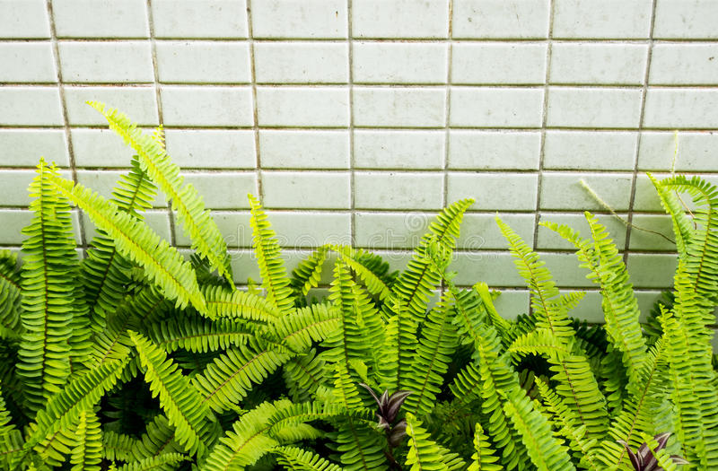 Ferns leaf with tiles texture background.  royalty free stock images