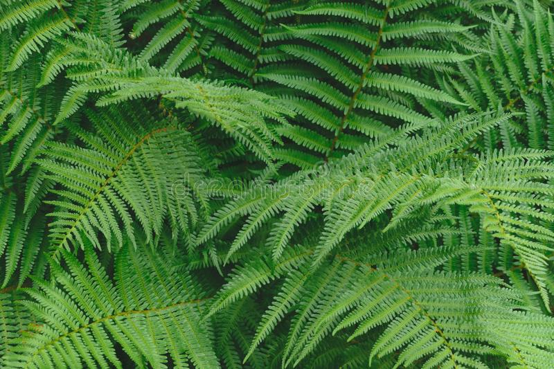 Ferns leaves green foliage in soft colors background surface.  stock photo