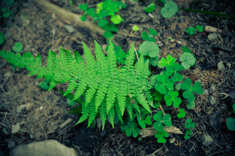 Ferns and moss green . Grows on rocky ground. stock images