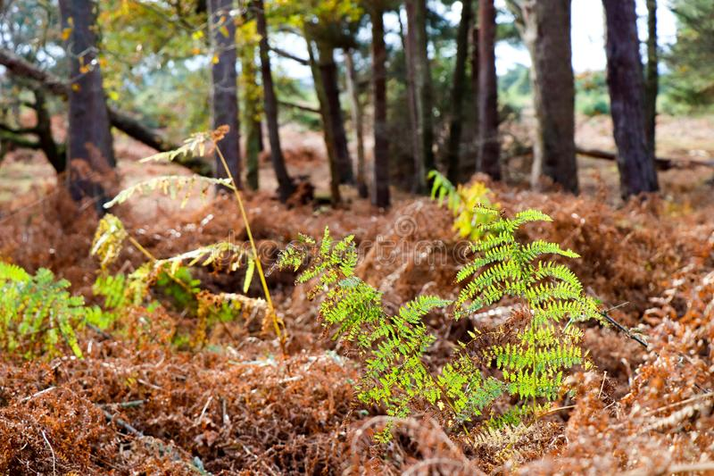 Ferns in the Sunlight stock photography