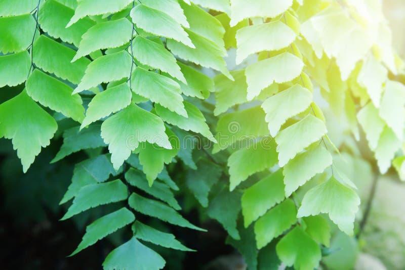 Ferns Tropicais Exóticos na Floresta fotografia de stock royalty free